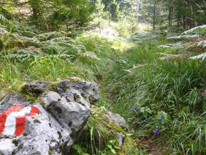 Rundwanderung Schwandnock-Hachelnock (Teil von Erzberg Höhenweg) bei Bad Bleiberg